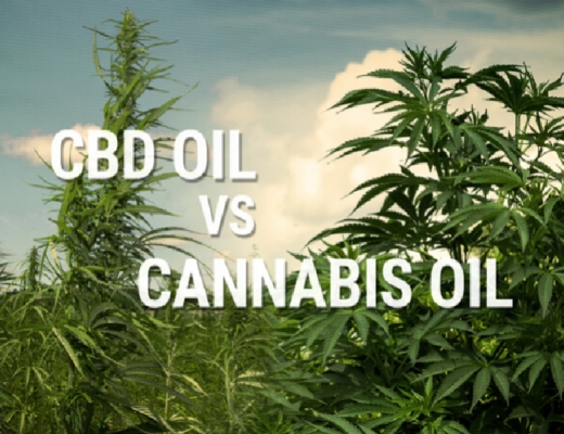 Hemp oil vs CBD oil: Properties and Benefits
