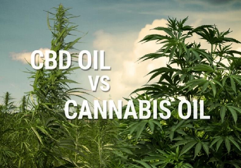 Hemp oil vs CBD oil: Properties and Benefits